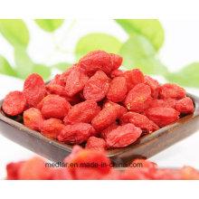 Comida para a maça Himalayan Goji Berry