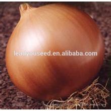 MON03 Huang 96 graines d'oignon jaune global en ventes
