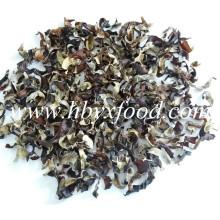 Agaric, morceaux de champignons noirs naturels naturels séchés
