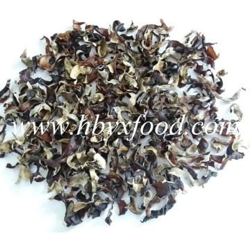 Agaric, Getrocknete organische grüne natürliche schwarze Pilz-Scheiben