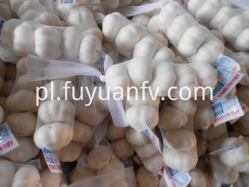 export to kuwait garlic