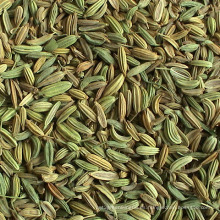 25kgs / 50kgs PP Bags China Best-Selling Fennel Seeds