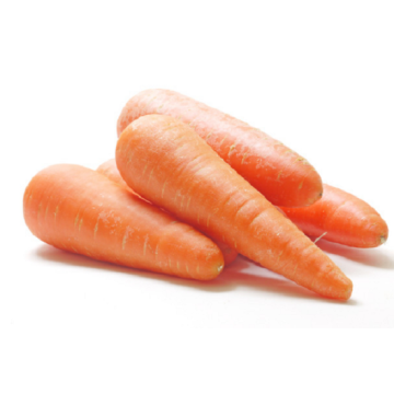 Fresh Carrots Are Popular