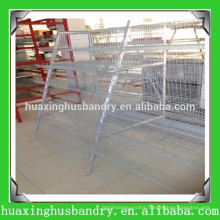 Henan Huaxing quail farming