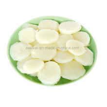 Vegetable Canned Water Chestnut with Best Price