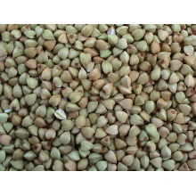 Kernels chineses de trigo sarraceno Yulin Origin (BW-007)