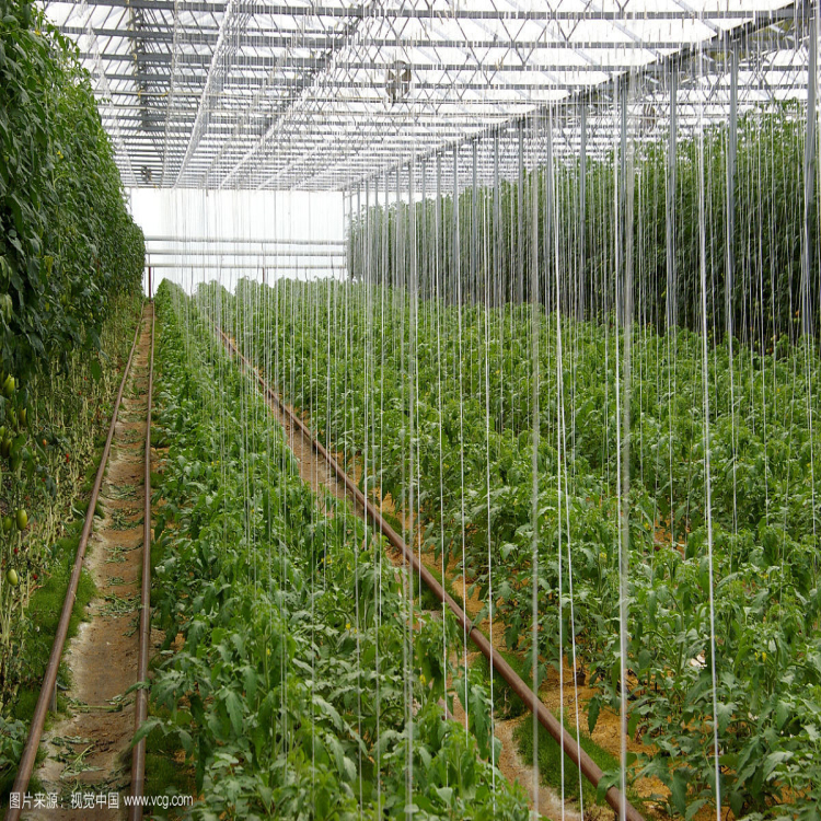 Tomato Trellis Line Tips Supporting Cucumbers Tomatoes