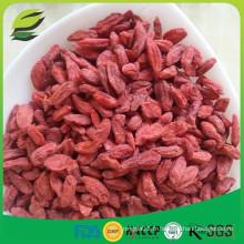 Importer des plantes noires de baies de goji séchées goji