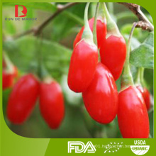 wholesale high quality organic Chinese wolfberries/goji berries from China