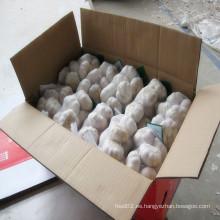Ajo blanco normal fresco en 500g o bolsa de malla de 1 kg dentro de 10 Kg / cartón para MID-East Market