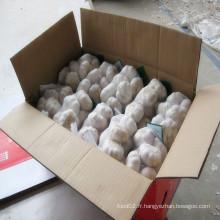 Ail blanc normal frais dans un sac en maille de 500g ou 1 Kg dans 10 Kg / Carton pour MID-East Market