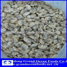 Frozen Venerupis Variegata clam meat