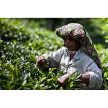 Maschinenfabrik Preis Tee Farbe Sortiermaschine Weißer Tee Farbsortier Sortiermaschine made in China mit CCD-Kamera