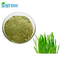 Xi`an SOST Wholesale Organic Natural Wheat Grass Extract Powder