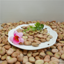 Dried light yellow broad bean in shell