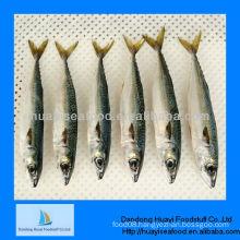 frozen seafood spanish mackerel