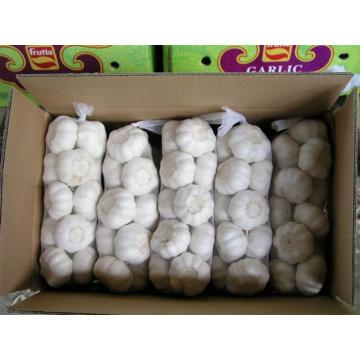 Exportación china buena calidad ajo blanco puro