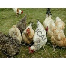 Chicken Wire, Direct Factory Sales