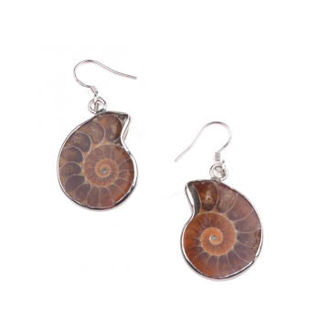 Conch Shell Fossils Animal Dangle Hook Earring