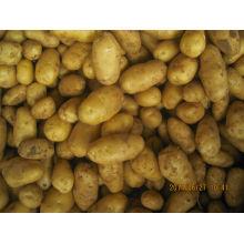Китайский свежий картофель 2014