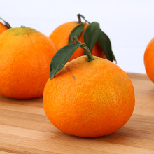 China for Sweet Citrus Top orange county instagram supply to Central African Republic Importers