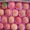 heißer Verkauf Chinesischer Fuji Apfel Obst frischer Apfel
