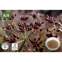 Natural Caraway Seed Extract; Carum Carvi L Extract