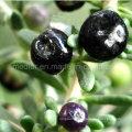 Medlar High Quality Ningxia Black Goji Berry