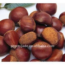 Chestnut chino de alta calidad y bajo precio