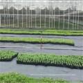 Estera tejida de la tela de la tela de los PP usada en agricultura