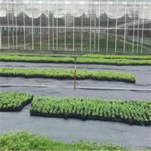 Tecido tecido PP de 80GSM como erva daninha / Cobertura do solo / Vedação de silvano / Paisagismo / Geotexteis