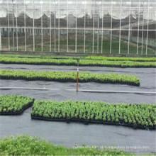 Esteira tecida PP da erva daninha da tela usada na agricultura