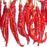 A Grade Hot Chilli