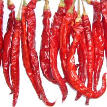Nova Colheita Boa Qualidade Seco Pimentões Vermelhos Quentes
