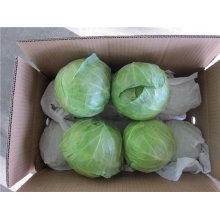 Chinês fresco verde redondo couves