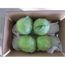 Китайская свежая зеленая круглая капуста
