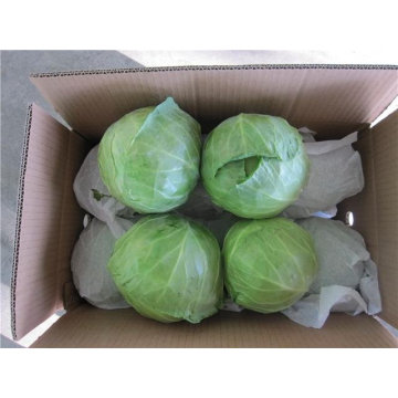 chinese fresh green cabbages