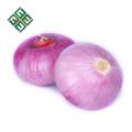 exporter de l'oignon frais de Chine