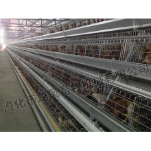 Full Automatic Layer Cage Certificate of ISO9001