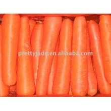 Chinesische Preminum Karotte für den Export