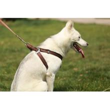 Wholesale pet dog leash and dog harness vest