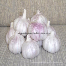 New Crop Normal White Garlic, Garlic Flake, Garlic Powder