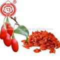China wolfberry gouji berry gou qi zi for sale