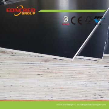 Madera contrachapada principal del material y de la construcción del álamo usada