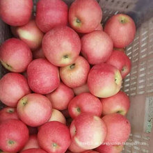 Neuer Ernte-frischer süßer roter Gala Apple
