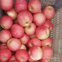 Nouvelle pomme de Gala douce et fraîche