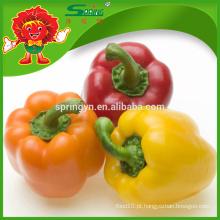Melhor preço para pimentões, fornecimento de fábrica de capsicum colorido