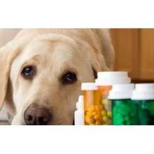 Imported Veterinary Drug Registration