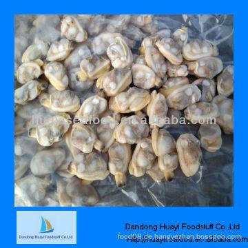 Gefrorene gekochte, kurzhalsige Muschel