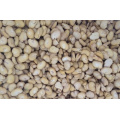 Peeled Fava Beans 2017 Crop Qinghai Origin